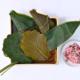 軸付き笹の葉パック、柏葉パック、青柏葉パック、桜葉パック、青桜葉パック、桜花塩漬